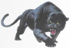 wjpanther